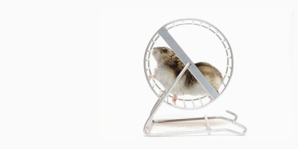 hamster-running-in-a-wheel-to-represent-scalability-on-demand